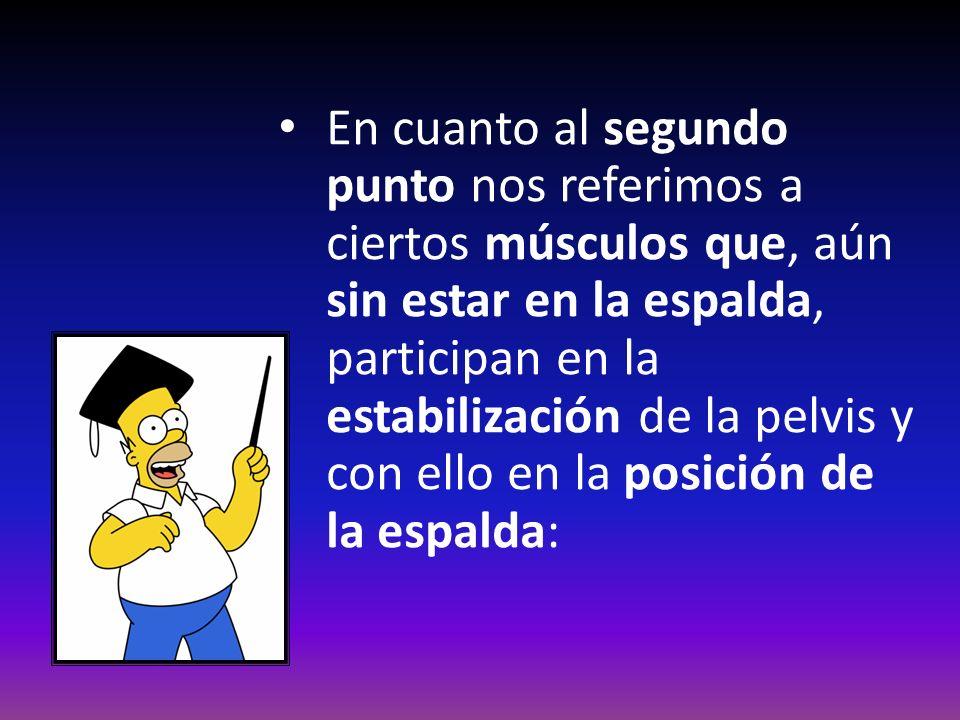 En cuanto al segundo punto nos referimos a ciertos músculos que, aún sin estar en la espalda, participan en la estabilización de la pelvis y con ello