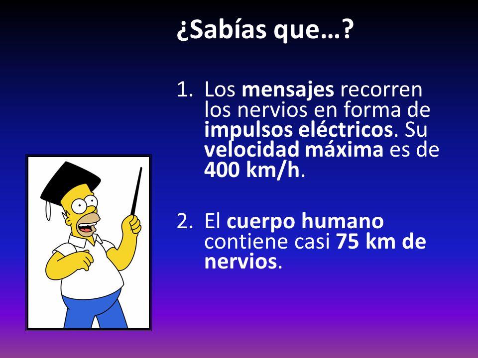 ¿Sabías que…? 1.Los mensajes recorren los nervios en forma de impulsos eléctricos. Su velocidad máxima es de 400 km/h. 2.El cuerpo humano contiene cas