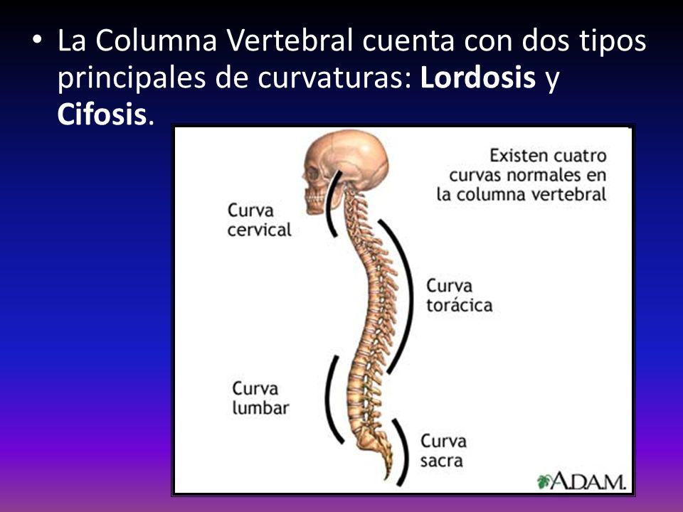 La Columna Vertebral cuenta con dos tipos principales de curvaturas: Lordosis y Cifosis.