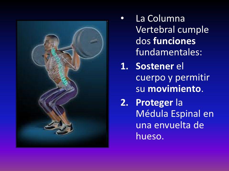 La Columna Vertebral cumple dos funciones fundamentales: 1.Sostener el cuerpo y permitir su movimiento. 2.Proteger la Médula Espinal en una envuelta d