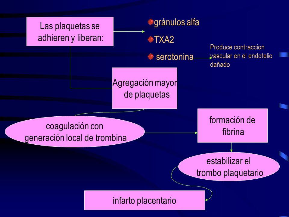 PLAQUETAS Y COAGULACION: SEROTONINA La Preeclampsia es un proceso que depende del trofoblasto mediado por disfunción plaquetaria. En la superficie, si