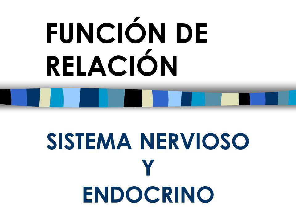Función de relación ¿En que consiste la función de relación? ¿Qué sistemas participan en ella?