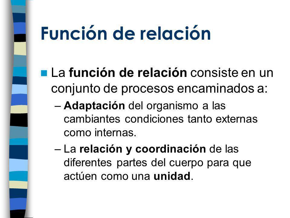 Función de relación La función de relación consiste en un conjunto de procesos encaminados a: –Adaptación del organismo a las cambiantes condiciones t