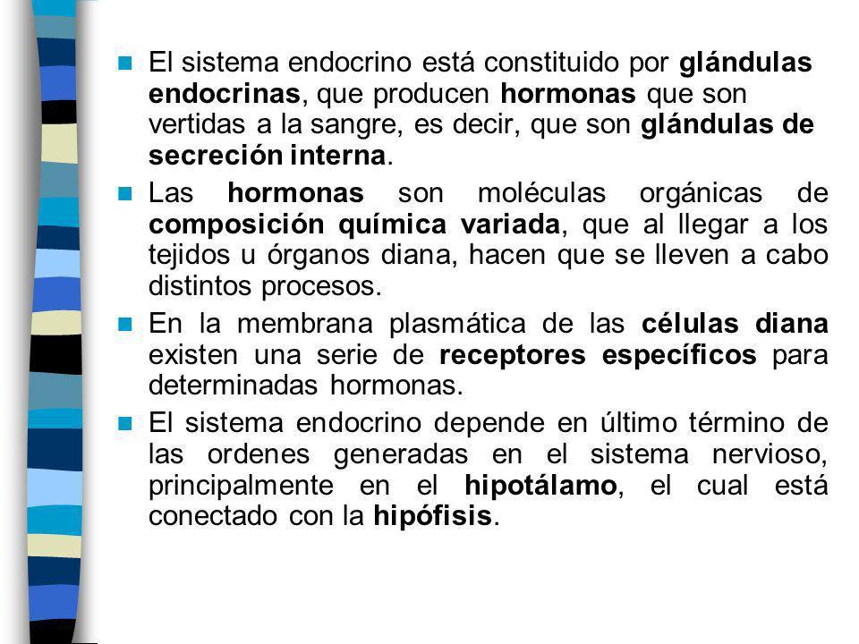 El sistema endocrino está constituido por glándulas endocrinas, que producen hormonas que son vertidas a la sangre, es decir, que son glándulas de sec
