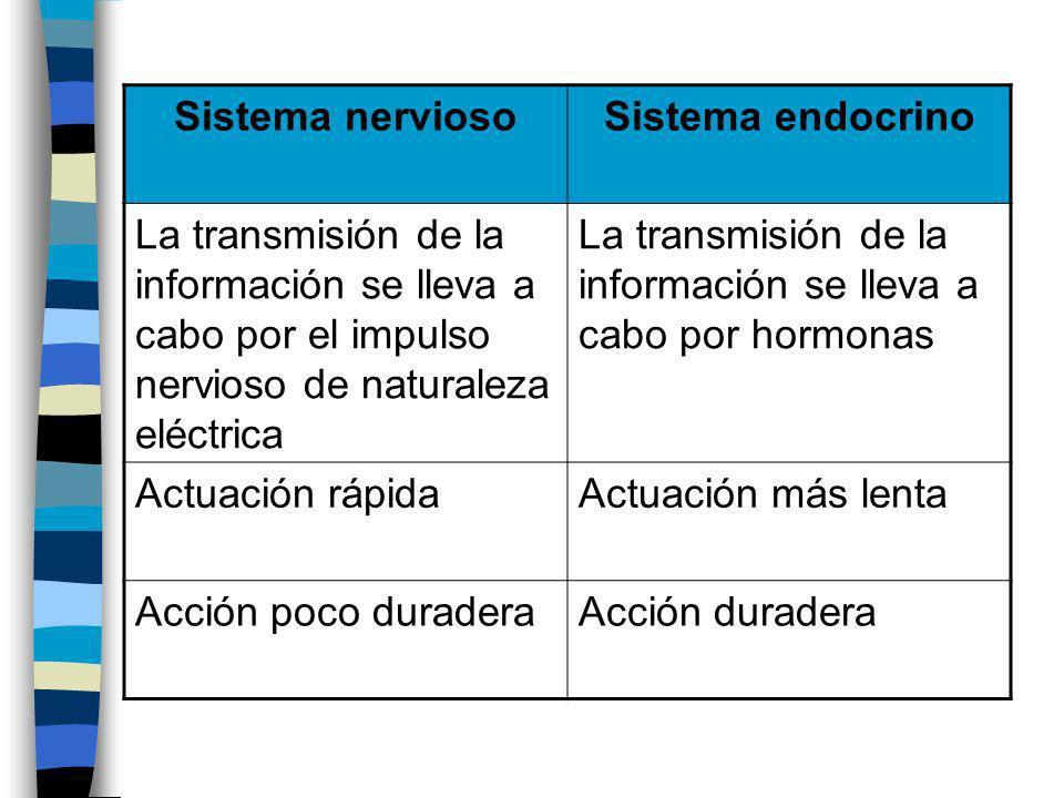 Sistema nerviosoSistema endocrino La transmisión de la información se lleva a cabo por el impulso nervioso de naturaleza eléctrica La transmisión de l