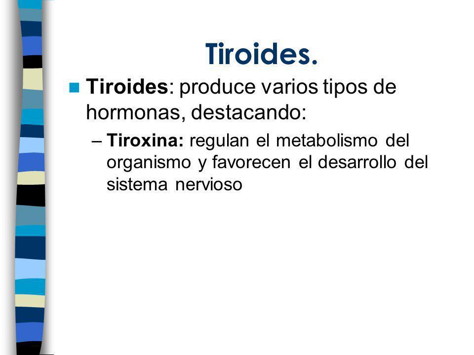 Tiroides. Tiroides: produce varios tipos de hormonas, destacando: –Tiroxina: regulan el metabolismo del organismo y favorecen el desarrollo del sistem