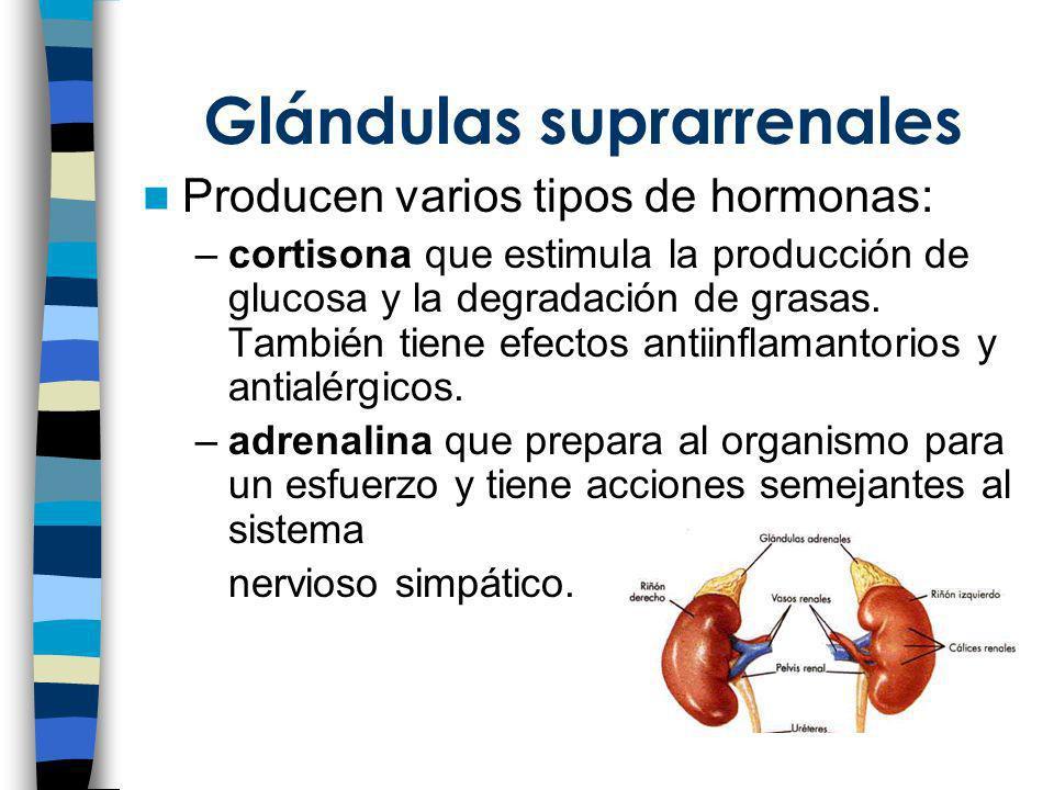 Glándulas suprarrenales Producen varios tipos de hormonas: –cortisona que estimula la producción de glucosa y la degradación de grasas. También tiene