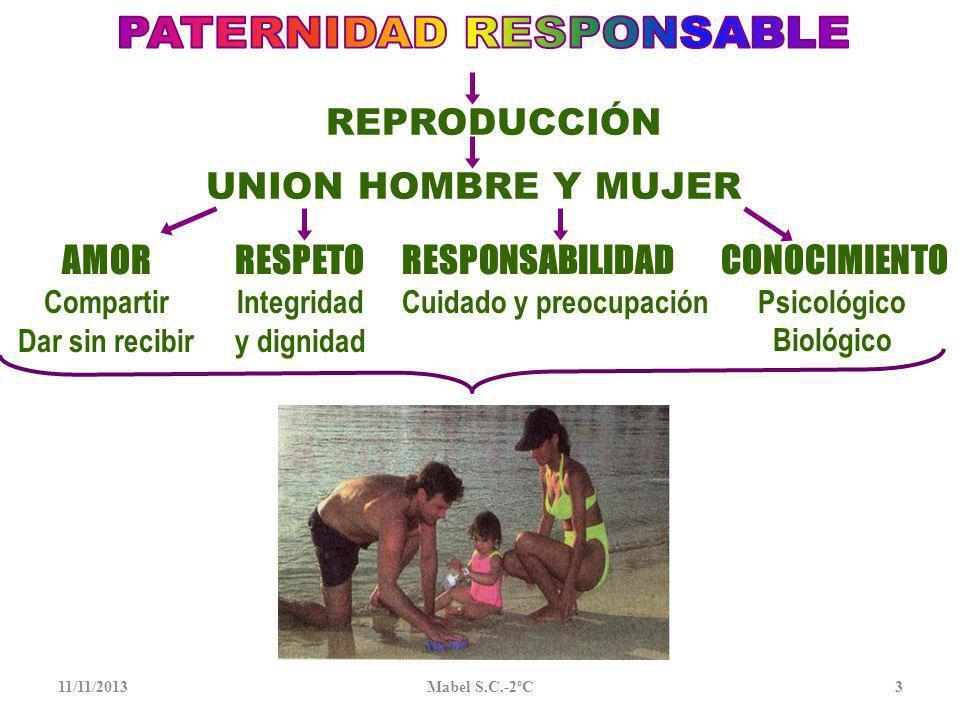 11/11/201323 En el coito o cópula sexual, el pene deposita millones de espermios en la vagina y ocurre la FECUNDACIÓN O unión ovocito y espermio en el 1er tercio de las Trompas de Falopio y forma el CIGOTO o huevo, horas después, la célula se divide en 2, 4 etc., convirtiéndose en EMBRIÓN En la 1ª semana de vida se traslada y se anida en el útero y ocurre la implantación del embrión y forma el FETO Protegido por la bolsa con liquido amniótico para su desarrollo