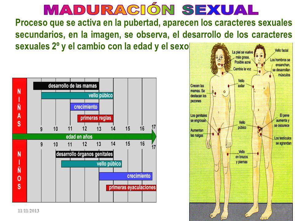 11/11/201324 En humanos es interna, ocurre en la ampula en las Trompas de Falopio La fecundación es la fusión del ovocito y espermatozoide.