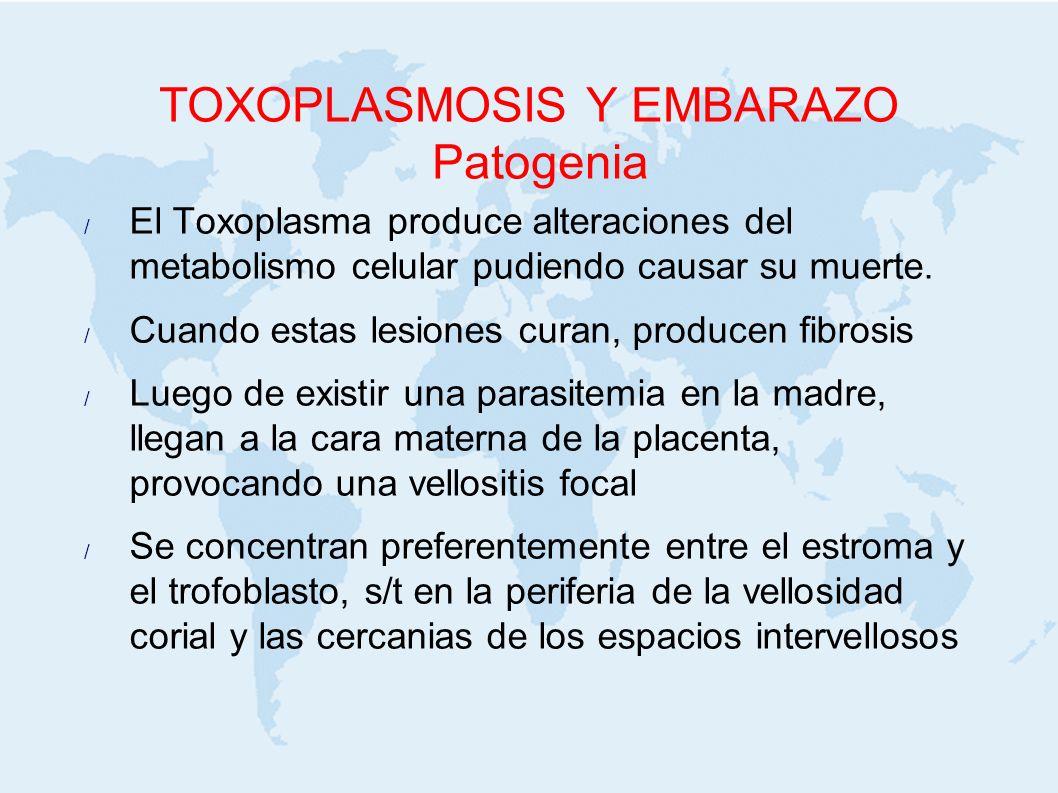 TOXOPLASMOSIS Y EMBARAZO Patogenia El Toxoplasma produce alteraciones del metabolismo celular pudiendo causar su muerte. Cuando estas lesiones curan,