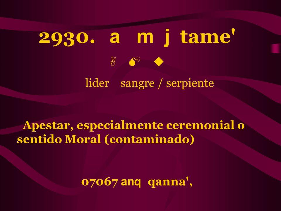 2930. a m j tame' A M u lider sangre / serpiente Apestar, especialmente ceremonial o sentido Moral (contaminado) 07067 anq qanna',
