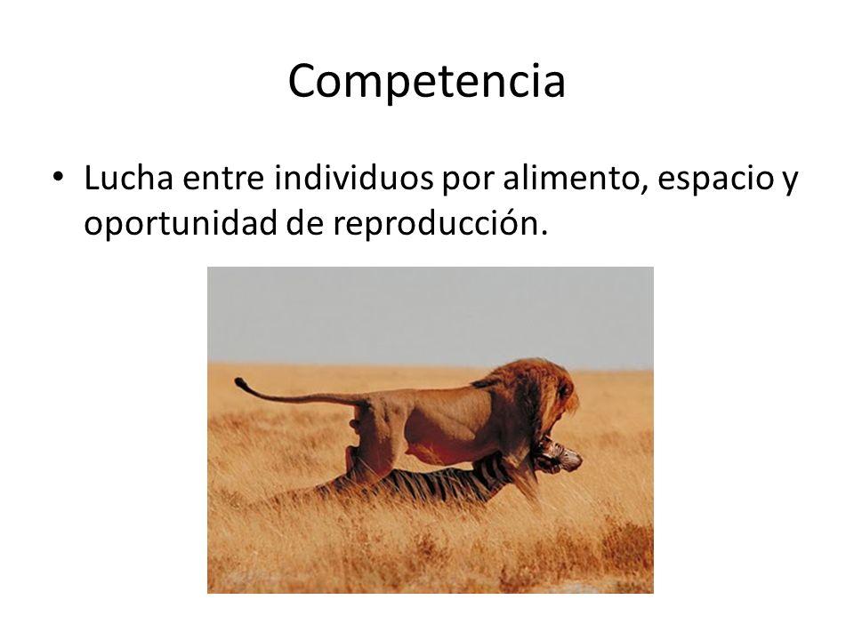 Competencia Lucha entre individuos por alimento, espacio y oportunidad de reproducción.