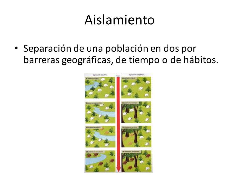 Aislamiento Separación de una población en dos por barreras geográficas, de tiempo o de hábitos.