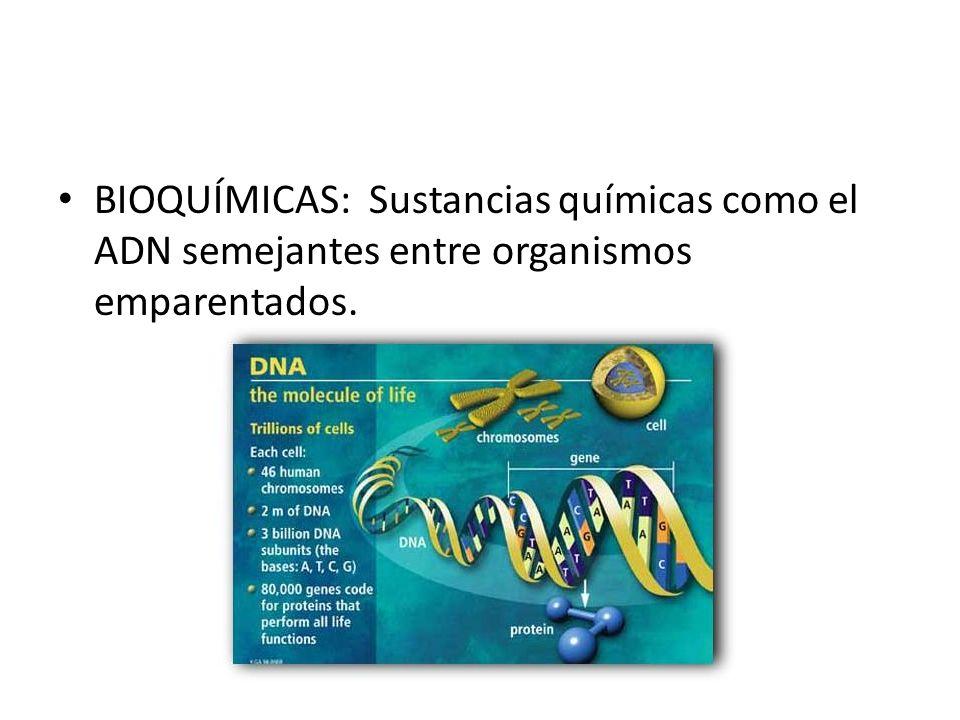 BIOQUÍMICAS: Sustancias químicas como el ADN semejantes entre organismos emparentados.
