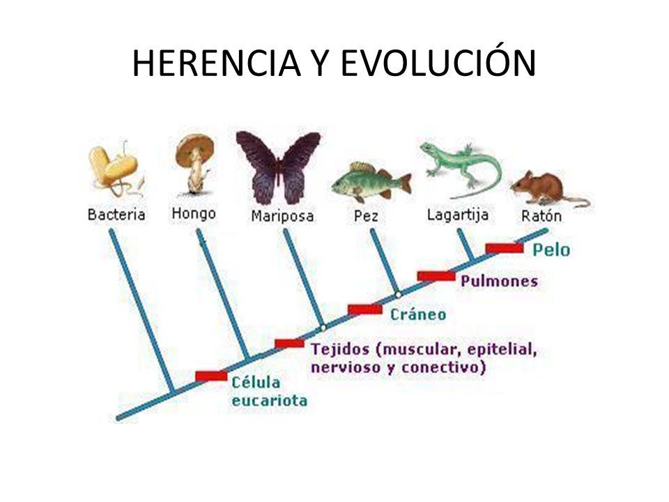 EVOLUCIÓN Cambios y transformaciones en la composición genética de los individuos que le permiten adaptarse al ambiente.