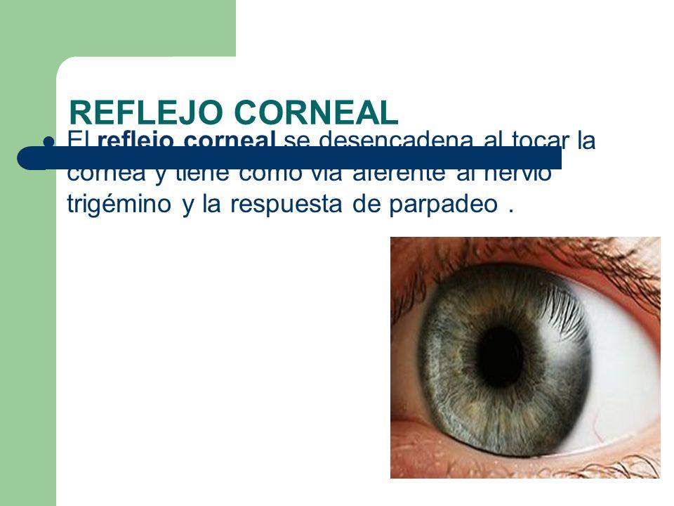 REFLEJO CORNEAL El reflejo corneal se desencadena al tocar la córnea y tiene como vía aferente al nervio trigémino y la respuesta de parpadeo.