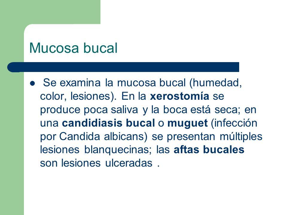 Mucosa bucal Se examina la mucosa bucal (humedad, color, lesiones). En la xerostomía se produce poca saliva y la boca está seca; en una candidiasis bu