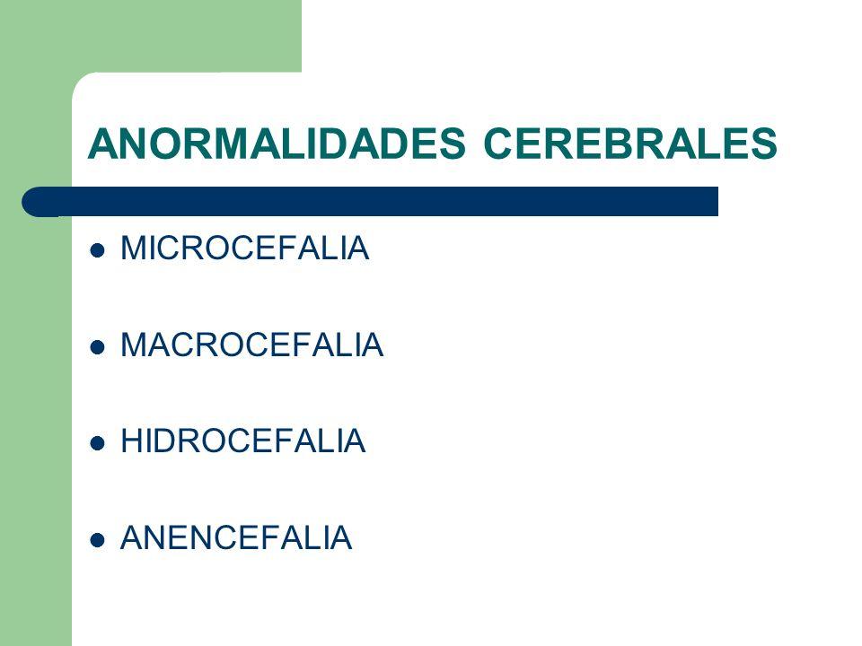 ANORMALIDADES CEREBRALES MICROCEFALIA MACROCEFALIA HIDROCEFALIA ANENCEFALIA