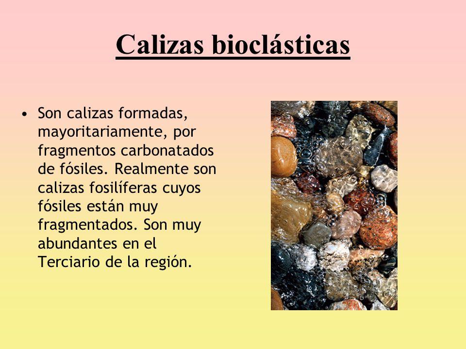 Calizas bioclásticas Son calizas formadas, mayoritariamente, por fragmentos carbonatados de fósiles. Realmente son calizas fosilíferas cuyos fósiles e