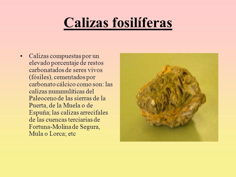 Calizas fosilíferas Calizas compuestas por un elevado porcentaje de restos carbonatados de seres vivos (fósiles), cementados por carbonato cálcico com