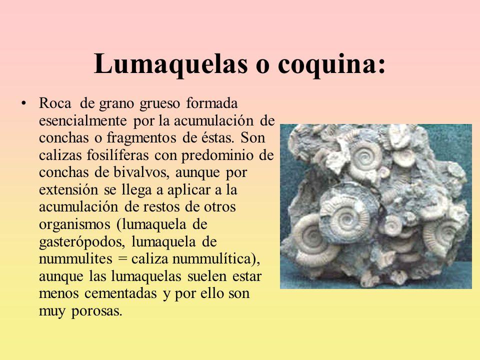 Lumaquelas o coquina: Roca de grano grueso formada esencialmente por la acumulación de conchas o fragmentos de éstas. Son calizas fosilíferas con pred