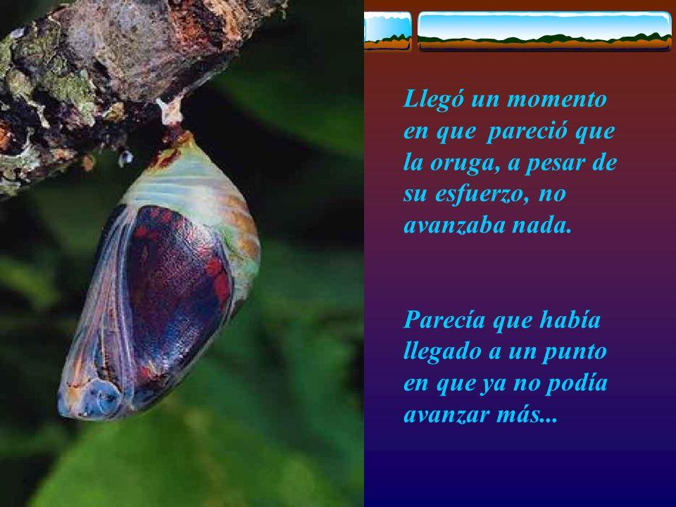 Escuela Padres L.Mesa La lección de la Mariposa