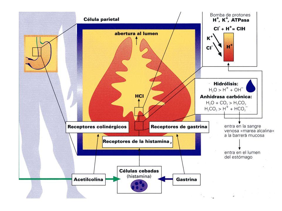 Gastritis por Reflujo Alcalino Gastritis por Reflujo Alcalino Definición Cambios inflamatorios de la mucosa gástrica como resultado del reflujo de contenido duodenal.Incidencia Probablemente baja.