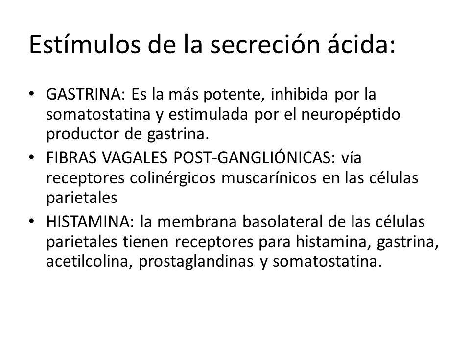 Estímulos de la secreción ácida: La histamina al estimular su receptor aumenta el AMPc y la secreción ácida, la gastrina y la acetilcolina lo hacen aumentando el Ca++ citosólico Peptonas y cafeína (también el café sin cafeína) estimulan la secreción de gastrina Etanol aumenta la secreción de HCl Calcio sólo en los pacientes con gastrinomas El pepsinógeno se secreta secundario a la mayoría de los estímulos que promueven la secreción de ácido, particularmente el estímulo colinérgico.