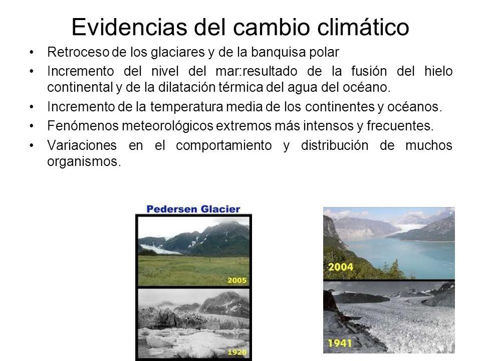 Evidencias del cambio climático Retroceso de los glaciares y de la banquisa polar Incremento del nivel del mar:resultado de la fusión del hielo contin
