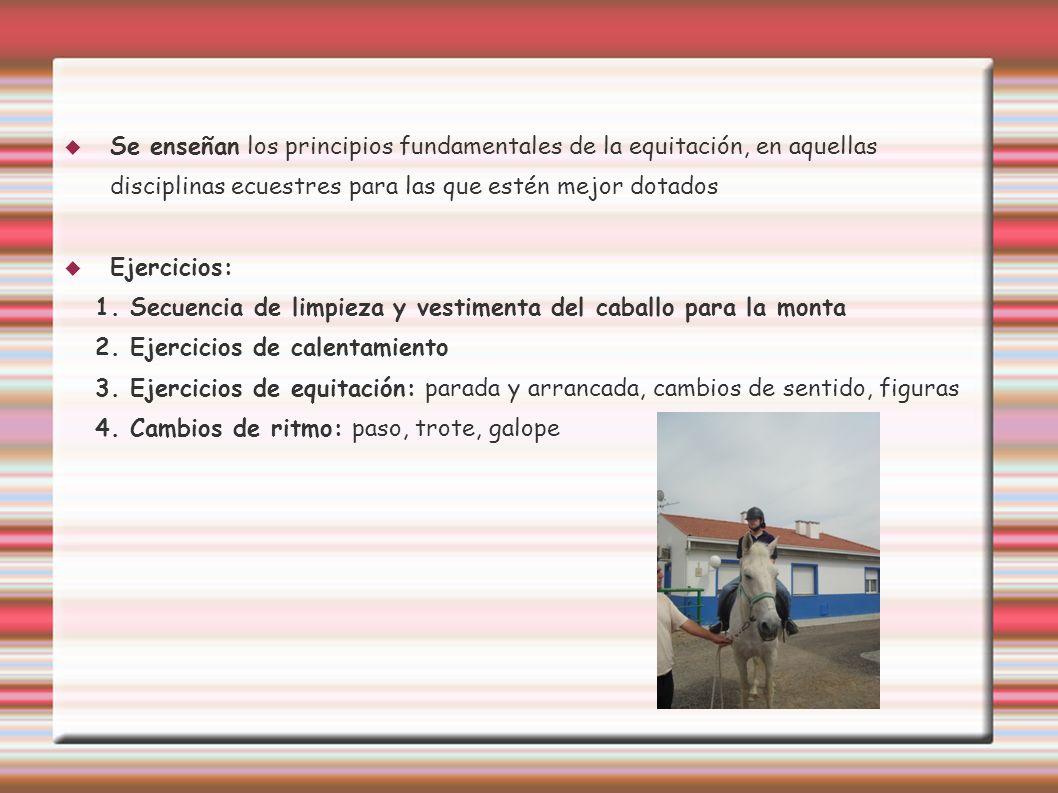 Se enseñan los principios fundamentales de la equitación, en aquellas disciplinas ecuestres para las que estén mejor dotados Ejercicios: 1. Secuencia