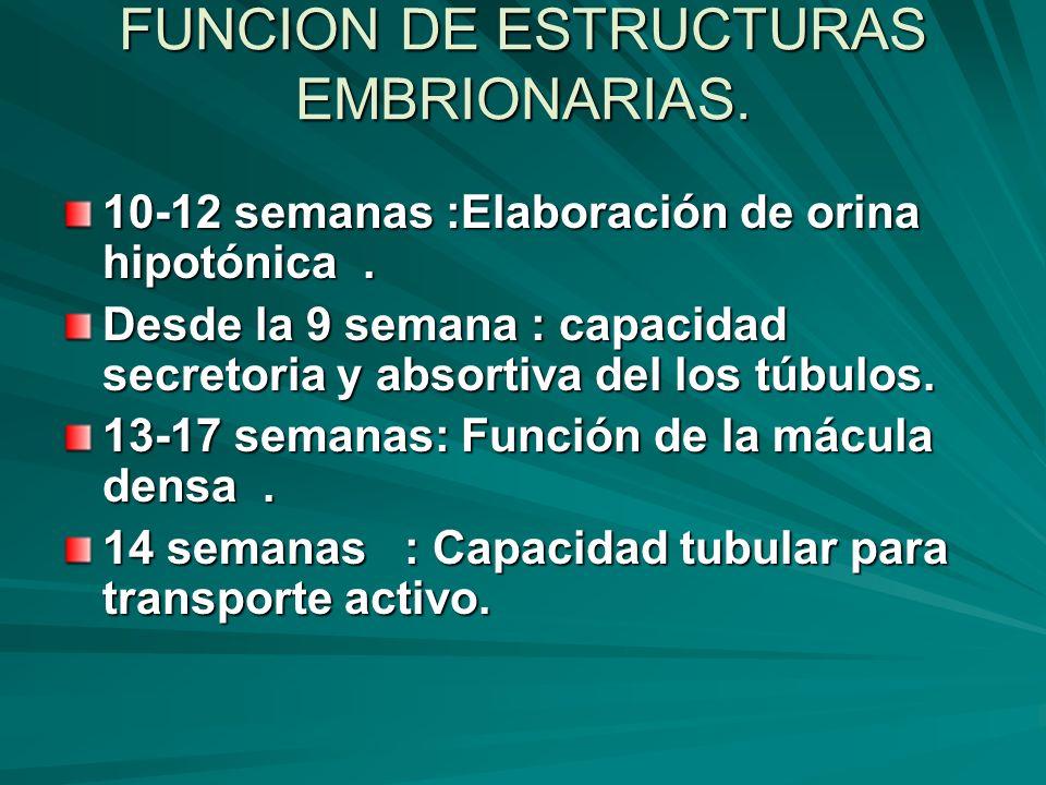 FUNCION DE ESTRUCTURAS EMBRIONARIAS. 10-12 semanas :Elaboración de orina hipotónica. Desde la 9 semana : capacidad secretoria y absortiva del los túbu