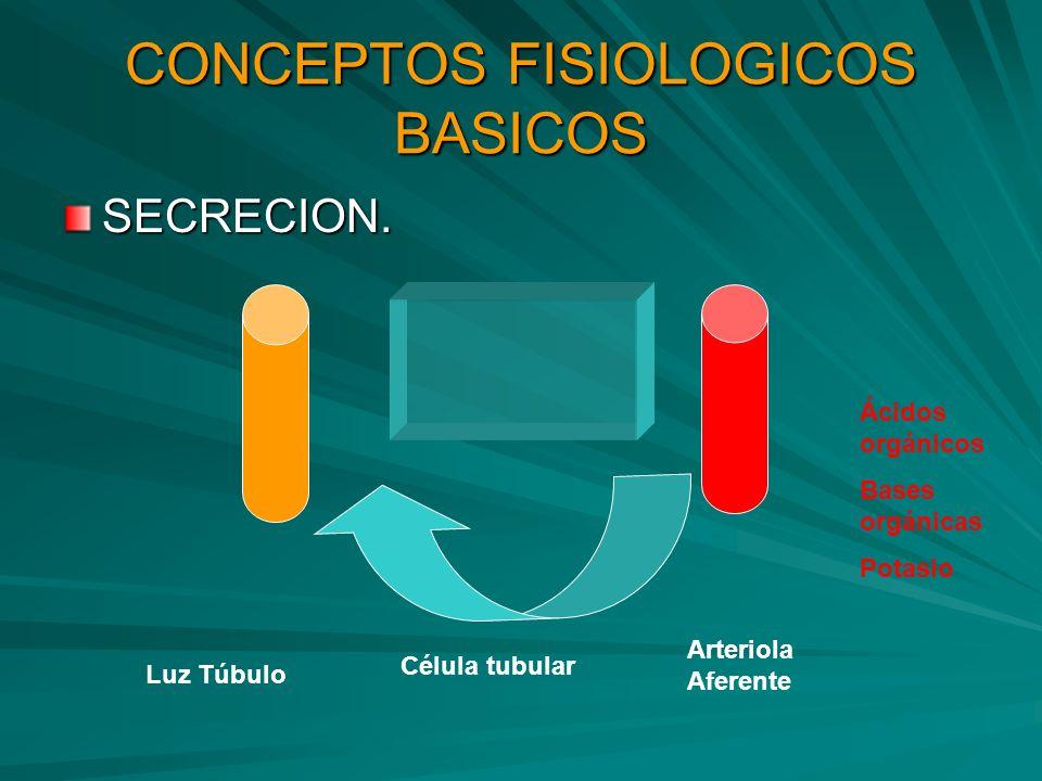 CONCEPTOS FISIOLOGICOS BASICOS SECRECION. Luz Túbulo Célula tubular Arteriola Aferente Ácidos orgánicos Bases orgánicas Potasio