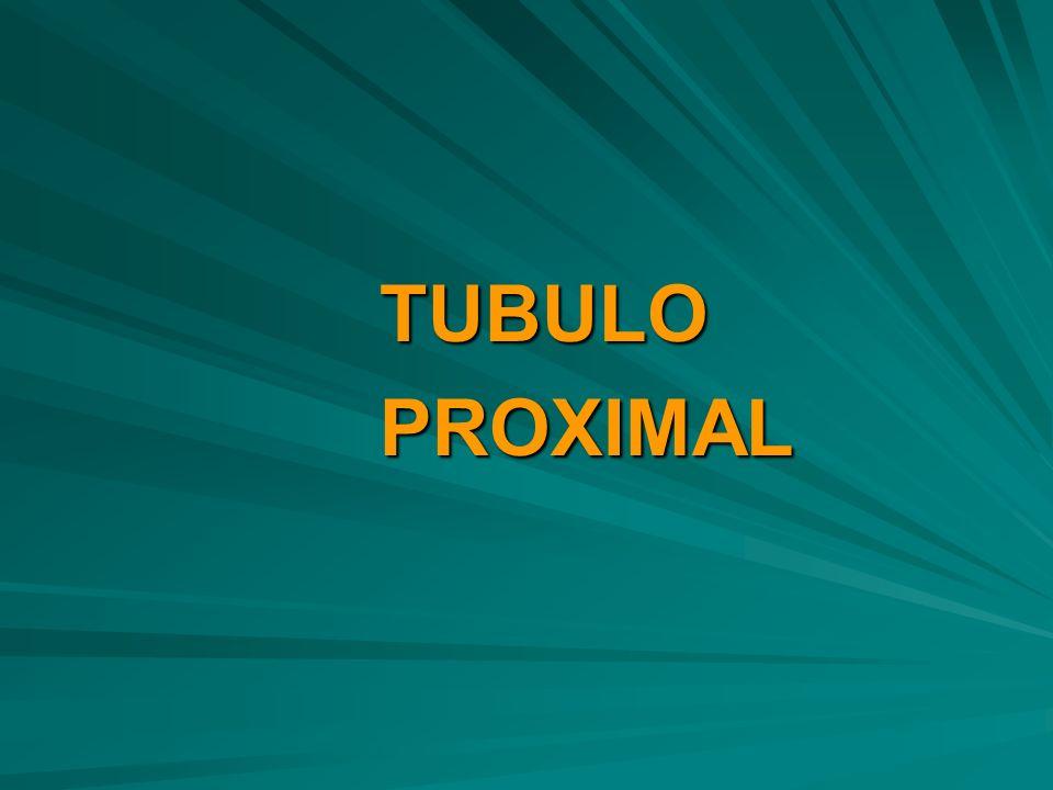 TUBULOPROXIMAL
