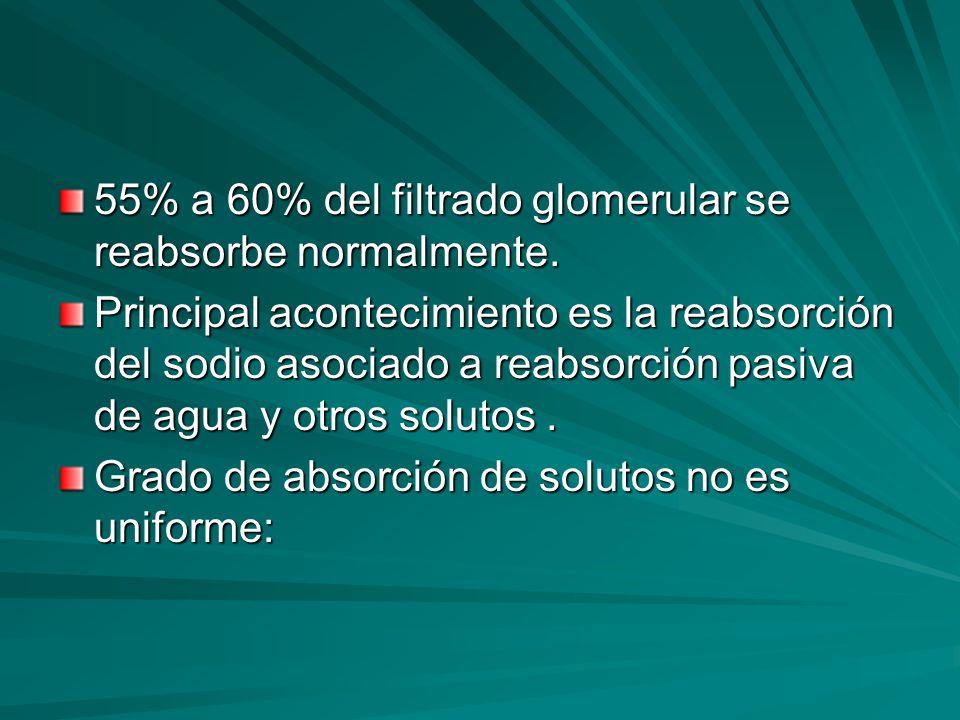 55% a 60% del filtrado glomerular se reabsorbe normalmente. Principal acontecimiento es la reabsorción del sodio asociado a reabsorción pasiva de agua