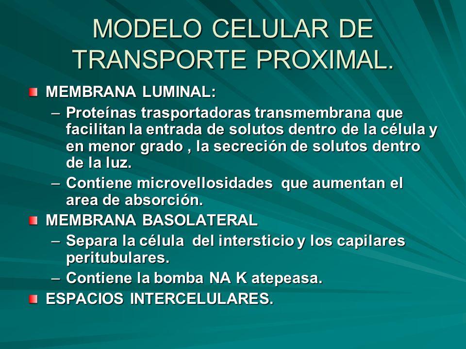 MODELO CELULAR DE TRANSPORTE PROXIMAL. MEMBRANA LUMINAL: –Proteínas trasportadoras transmembrana que facilitan la entrada de solutos dentro de la célu
