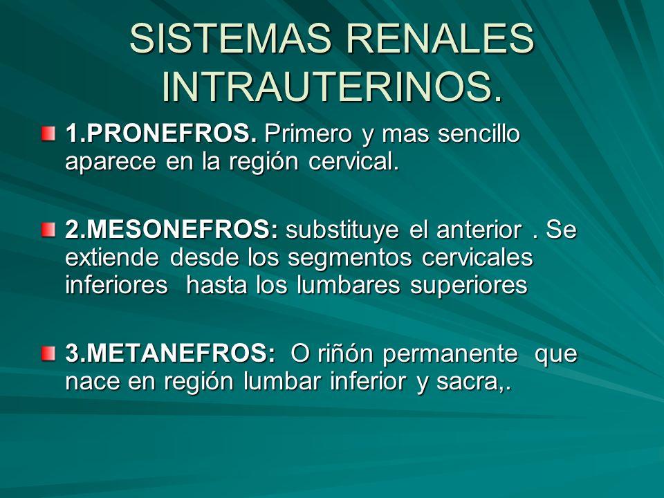 SISTEMAS RENALES INTRAUTERINOS. 1.PRONEFROS. Primero y mas sencillo aparece en la región cervical. 2.MESONEFROS: substituye el anterior. Se extiende d