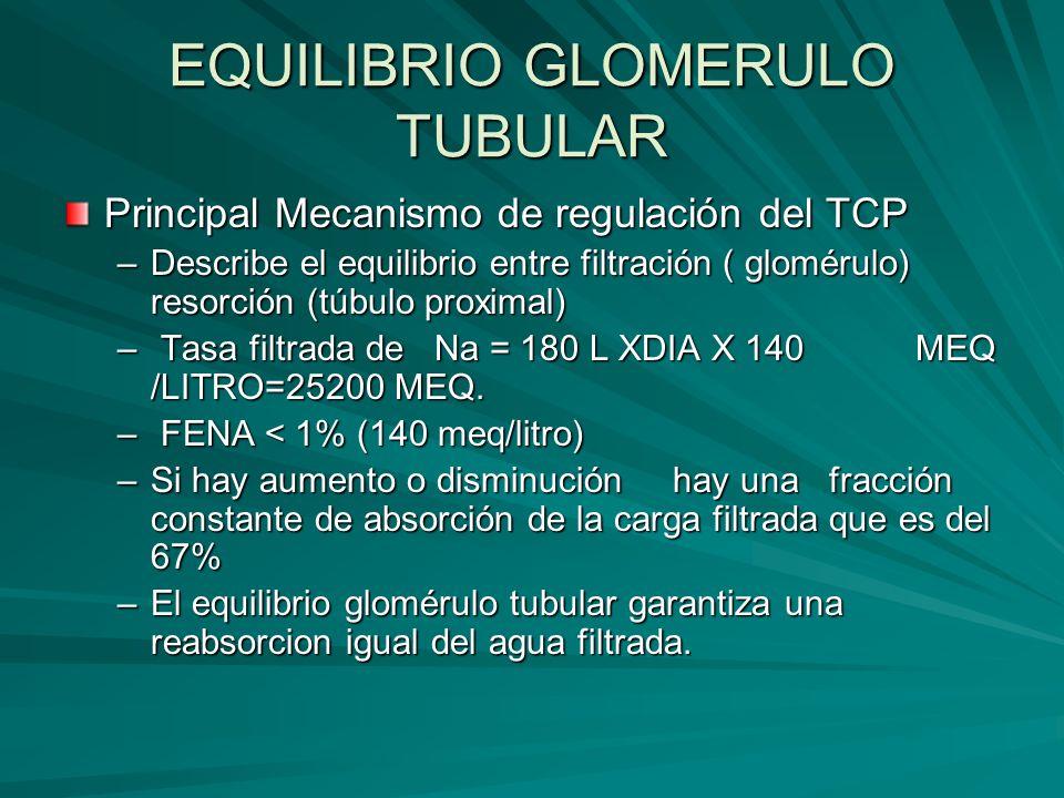 EQUILIBRIO GLOMERULO TUBULAR Principal Mecanismo de regulación del TCP –Describe el equilibrio entre filtración ( glomérulo) resorción (túbulo proxima