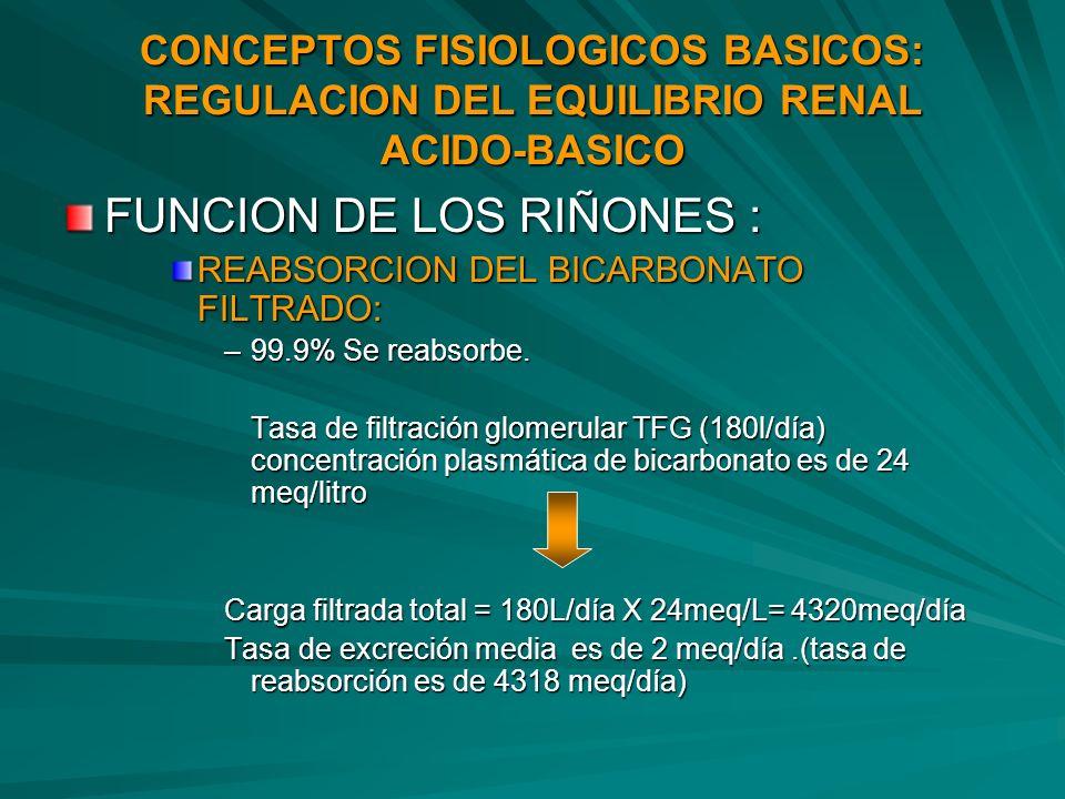 CONCEPTOS FISIOLOGICOS BASICOS: REGULACION DEL EQUILIBRIO RENAL ACIDO-BASICO FUNCION DE LOS RIÑONES : REABSORCION DEL BICARBONATO FILTRADO: –99.9% Se