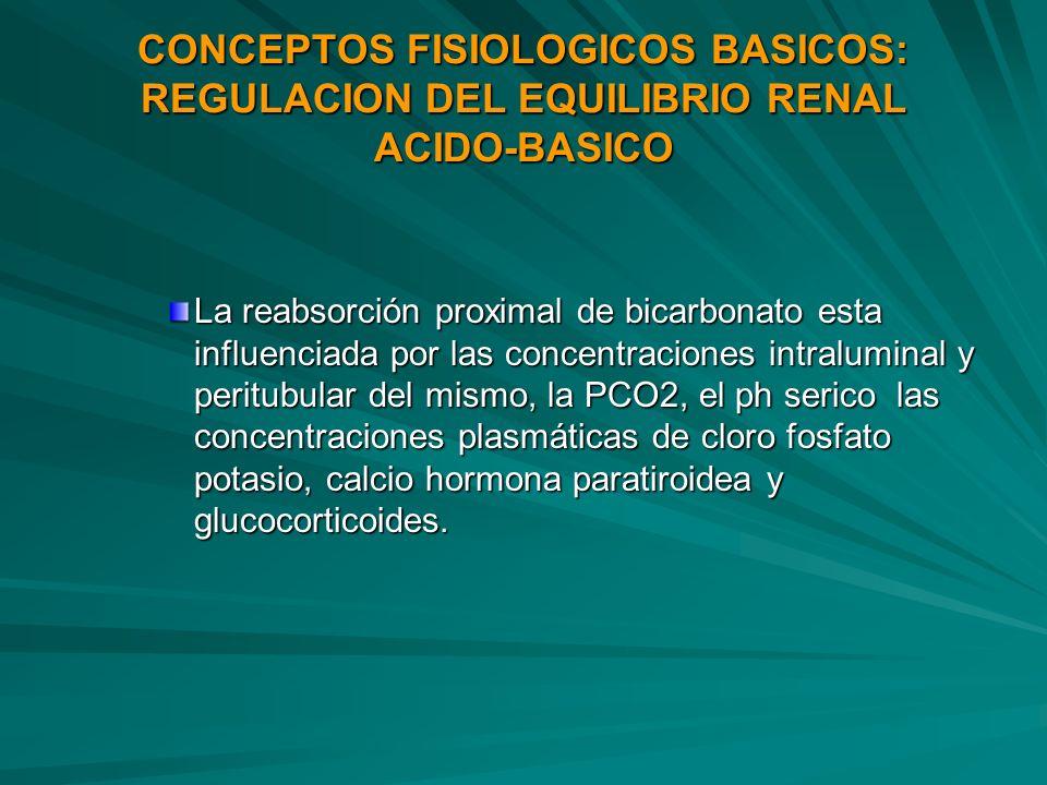 CONCEPTOS FISIOLOGICOS BASICOS: REGULACION DEL EQUILIBRIO RENAL ACIDO-BASICO La reabsorción proximal de bicarbonato esta influenciada por las concentr