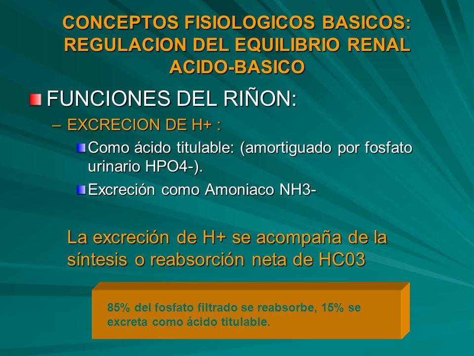 CONCEPTOS FISIOLOGICOS BASICOS: REGULACION DEL EQUILIBRIO RENAL ACIDO-BASICO FUNCIONES DEL RIÑON: –EXCRECION DE H+ : Como ácido titulable: (amortiguad