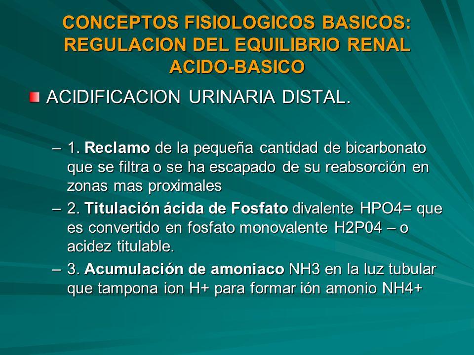 CONCEPTOS FISIOLOGICOS BASICOS: REGULACION DEL EQUILIBRIO RENAL ACIDO-BASICO ACIDIFICACION URINARIA DISTAL. –1. Reclamo de la pequeña cantidad de bica