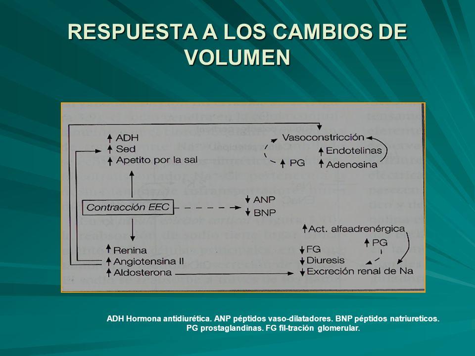 RESPUESTA A LOS CAMBIOS DE VOLUMEN ADH Hormona antidiurética. ANP péptidos vaso-dilatadores. BNP péptidos natriureticos. PG prostaglandinas. FG fil-tr