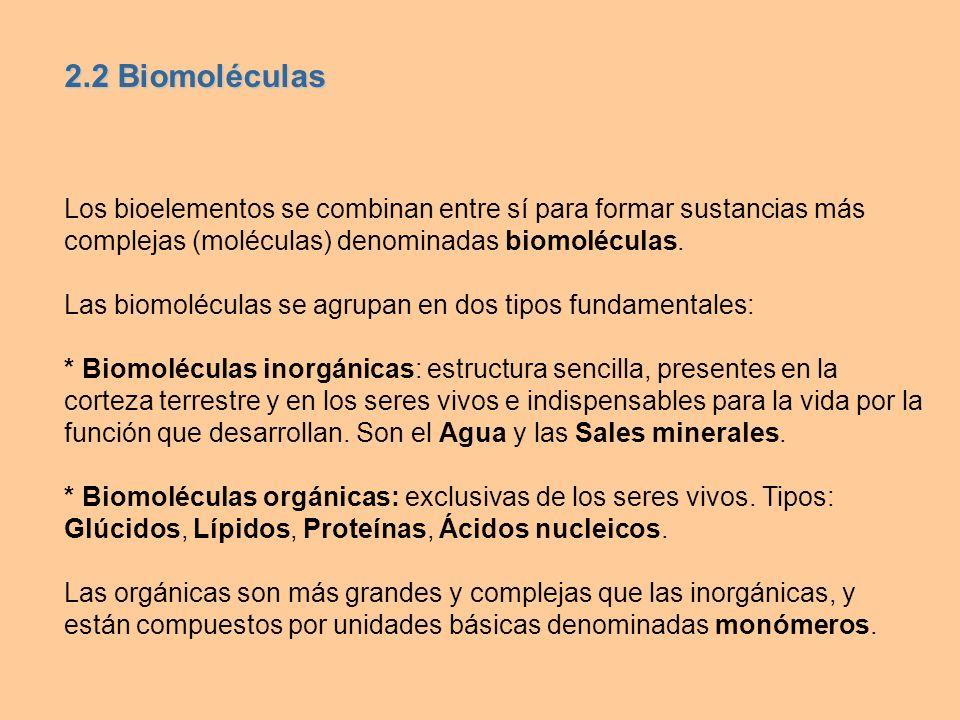 Los bioelementos se combinan entre sí para formar sustancias más complejas (moléculas) denominadas biomoléculas. Las biomoléculas se agrupan en dos ti