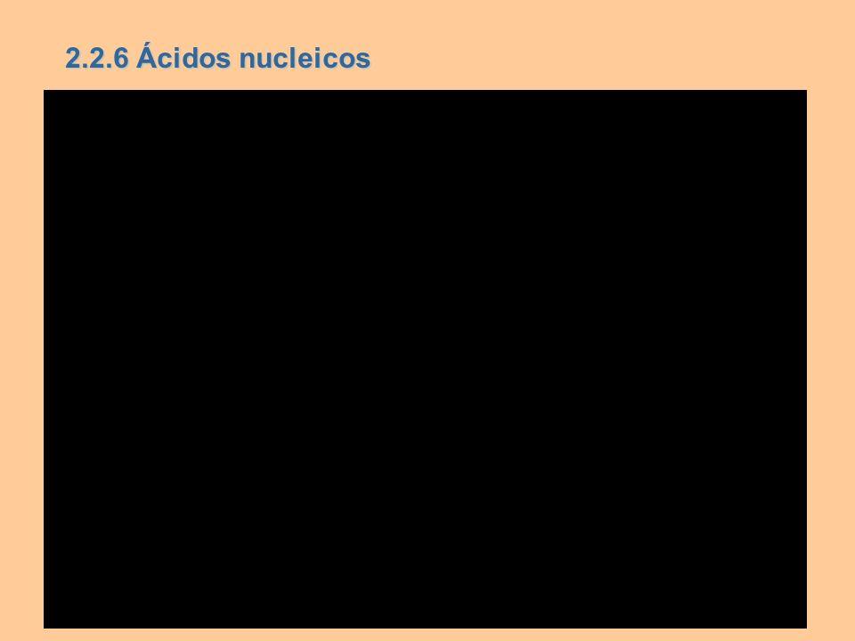 2.2.6 Ácidos nucleicos