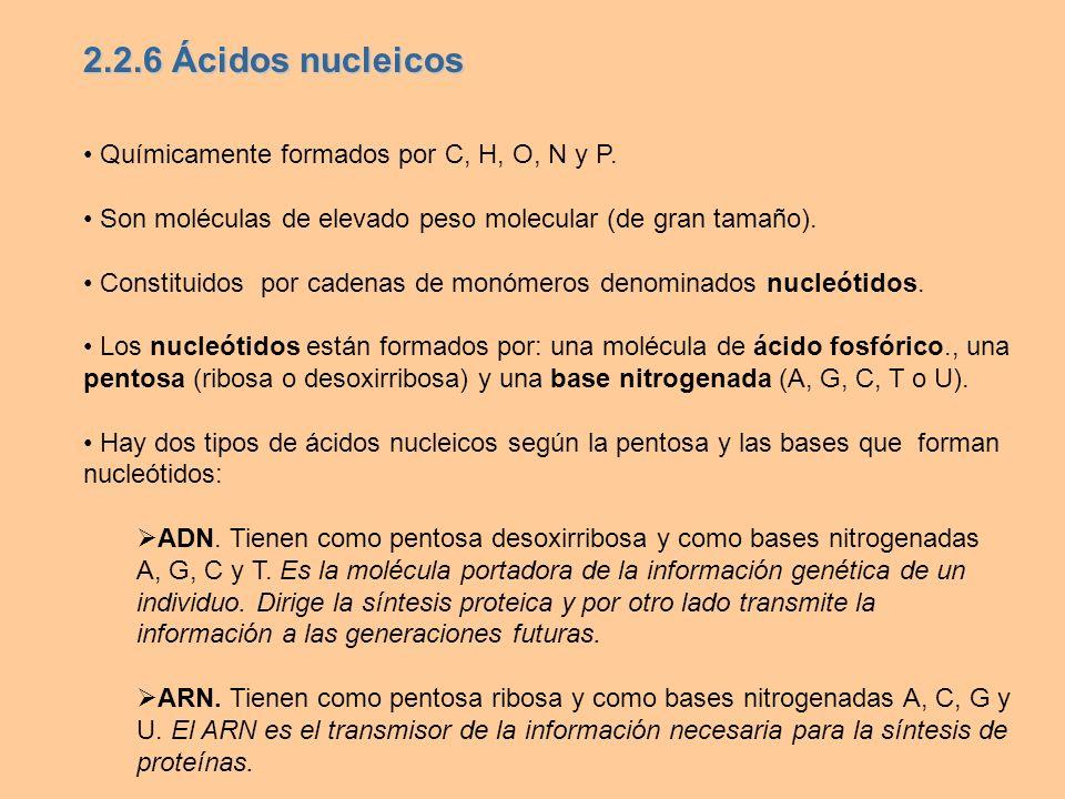 Químicamente formados por C, H, O, N y P. Son moléculas de elevado peso molecular (de gran tamaño). Constituidos por cadenas de monómeros denominados