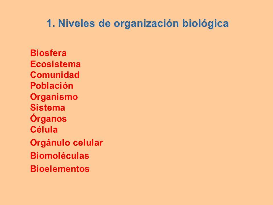 Biosfera Ecosistema Comunidad Población Organismo Sistema Órganos Célula Orgánulo celular Biomoléculas Bioelementos