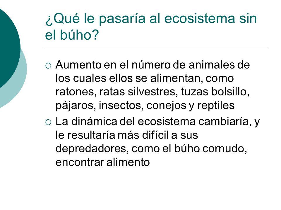 ¿Qué le pasaría al ecosistema sin el búho? Aumento en el número de animales de los cuales ellos se alimentan, como ratones, ratas silvestres, tuzas bo