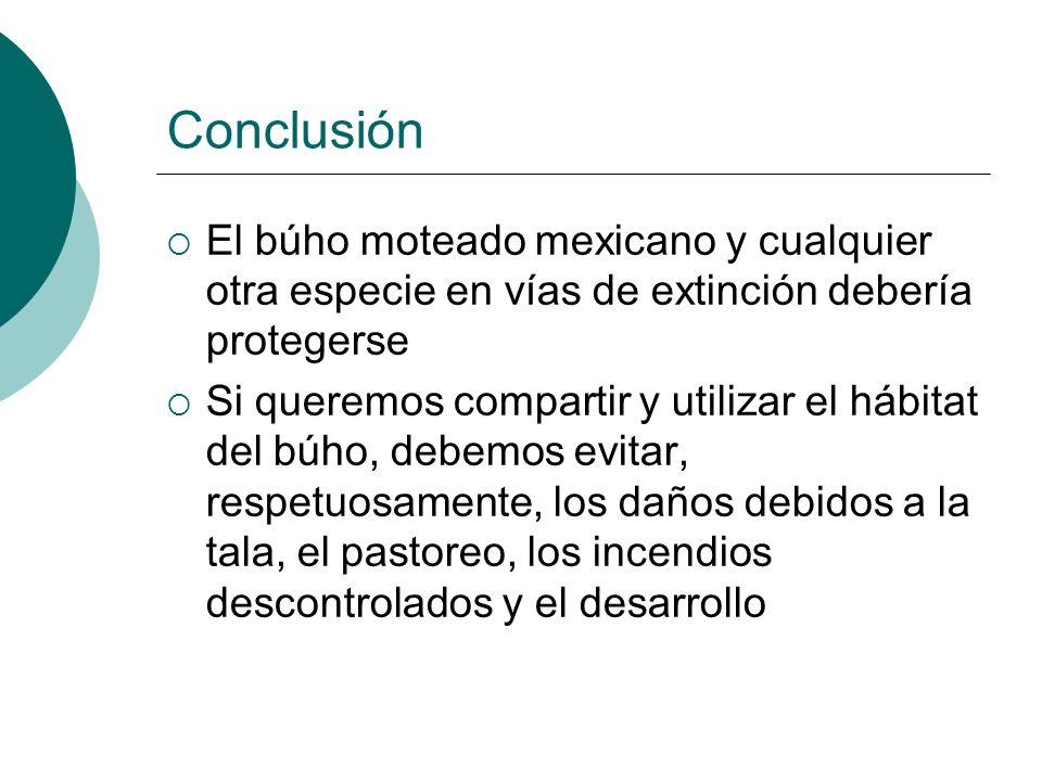 Conclusión El búho moteado mexicano y cualquier otra especie en vías de extinción debería protegerse Si queremos compartir y utilizar el hábitat del b