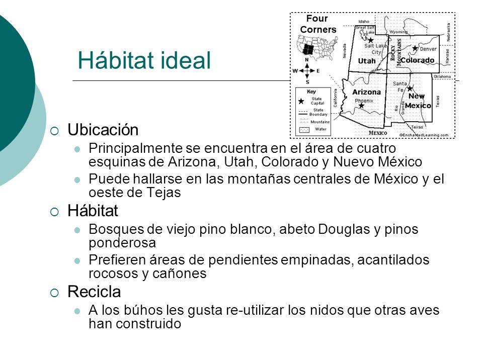 Hábitat ideal Ubicación Principalmente se encuentra en el área de cuatro esquinas de Arizona, Utah, Colorado y Nuevo México Puede hallarse en las mont