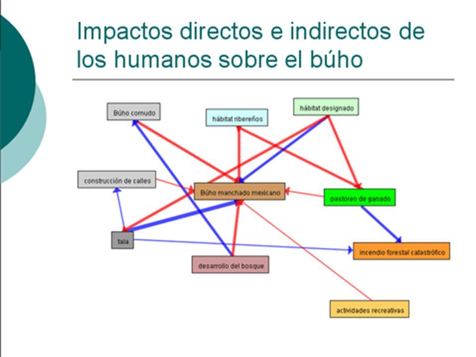 Impactos directos e indirectos de los humanos sobre el búho